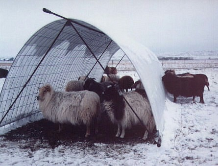 Image of a snow hut for Icelandic sheep