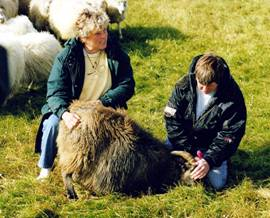 Image of Stefania at the Rettir catching a ewe